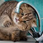gatto-gioca-con-acqua