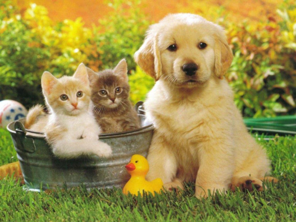Protezione del giardino in presenza di animali domestici for Bloccare i piani domestici